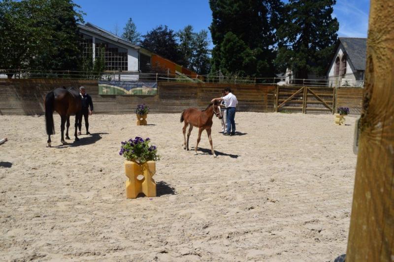 Journée modèles et allures Foals SF- 6 juillet 2016