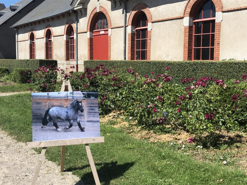 "Exposition "" Le cheval de trait Breton au Haras """